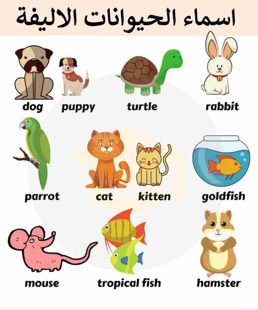 اسماء الحيوانات الاليفة بالانجليزية بالصور