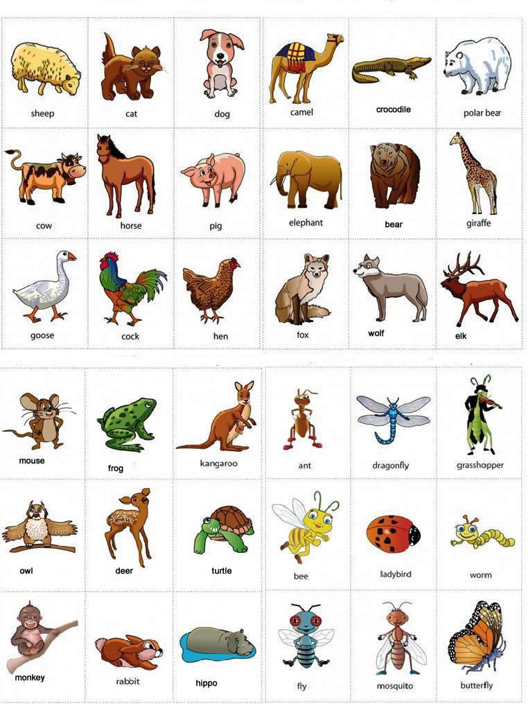 اسماء الحيوانات بالانجليزية بالصور Animal Names