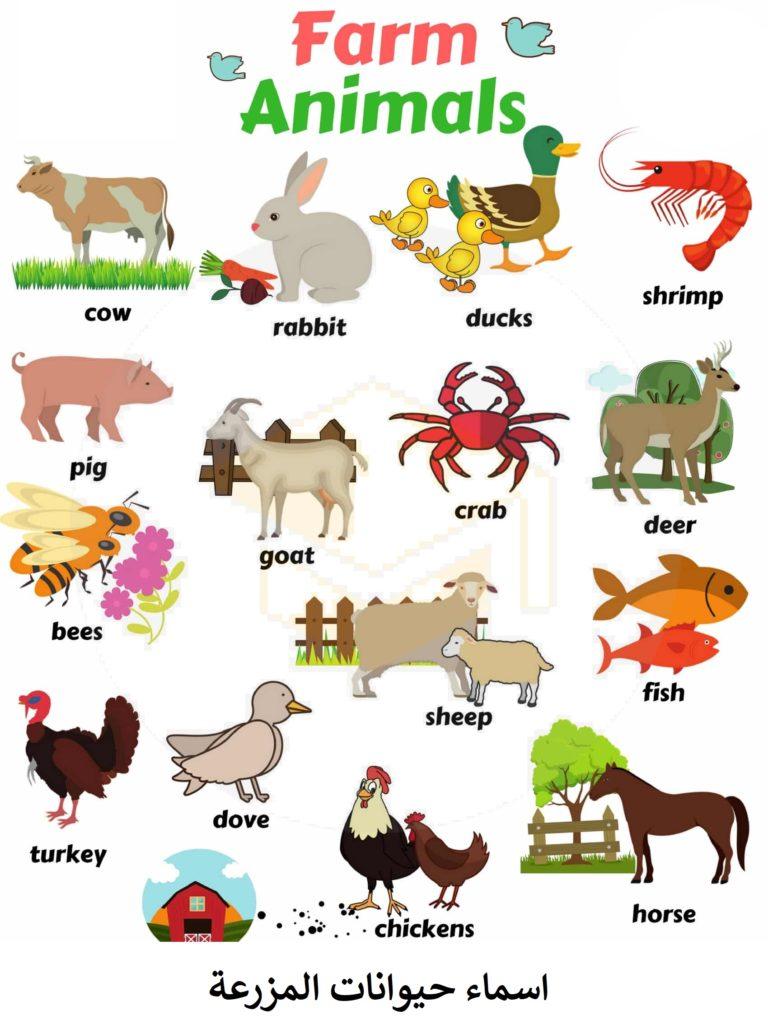 اسماء حيوانات المزرعة بالانجليزية Farm animals